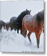 Seeking Shelter From The Storm  Metal Print