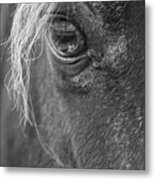 Seen Thru The Eye Metal Print