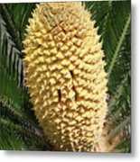 Sago Palm Flower Metal Print