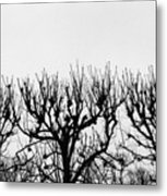 Seine River Trees Metal Print