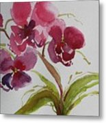 Selby Orchid II Metal Print