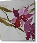 Selby Orchids Metal Print