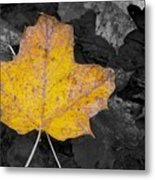 Selective Color Leaf Metal Print