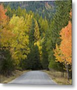 Selkirk Color Metal Print