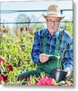Senior Gardener Selecting A Tree. Metal Print
