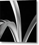 Sensuous Amaryllis Leaves Metal Print