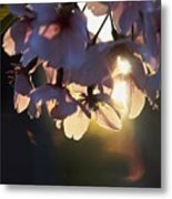 Sentimental Blooming Metal Print