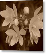 Sepia Flower Metal Print
