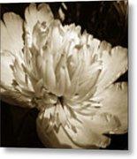 Sepia Peony Flower Art Metal Print