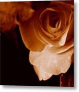 Sepia Series - Rose Petals Metal Print