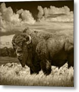 Sepia Toned Photograph Of An American Buffalo Metal Print