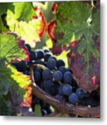 September Grapes - Square Metal Print