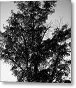September Tree ... Metal Print