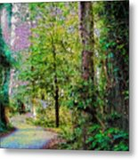Sequoia Park #1 Metal Print