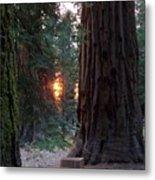 Sequoia Sunset Metal Print