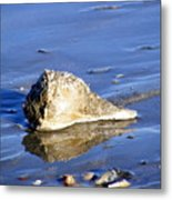 Serene Conch Shell At Isle Of Palms Metal Print