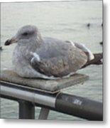 Serene Seagull Metal Print