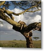 Serengeti Dreams Metal Print