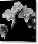 Serenity Metal Print by Barbara  White