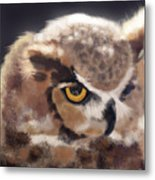 Serious Horned Owl Metal Print