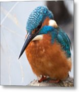 Serious Kingfisher Metal Print