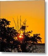 Setting Mangrove Sun Metal Print
