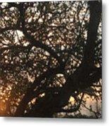 Setting Sun In Tree Metal Print