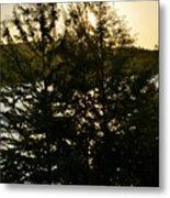 Setting Sun Through A Cypress Tree Metal Print