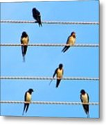 Seven Swallows Metal Print