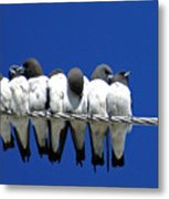 Seven Swallows Sitting Metal Print