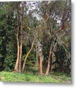 Seward Park Trees Metal Print