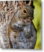 Sexy Squirrel Metal Print
