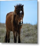 Shackleford Banks Pony Metal Print