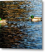 Shade And Sunlight - Mallard Ducks Metal Print