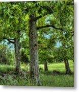 Shade Trees Metal Print
