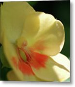Shaded Yellow Orchid Metal Print