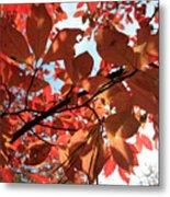 Shades Of Autumn Metal Print