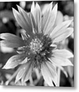 Shades Of Gray Flower By Earl's Photography Metal Print