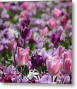 Days Of Wine And Tulips Metal Print
