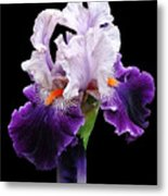 Shades Of Violet Metal Print