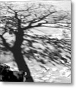 Shadow Tree  Herrick Lake  Naperville Illinois Metal Print