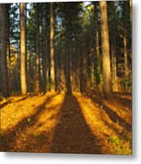 Shadows In Forrest  Metal Print