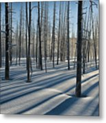 Shadows Of The Forest Metal Print