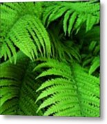 Shadowy Fern Metal Print
