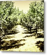 Shady Grove Palm Springs Metal Print
