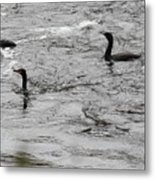Shags Metal Print