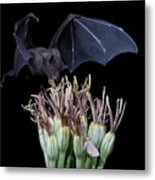 Sharing With The Moth Metal Print