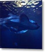 Shark In The Sunlight  Metal Print