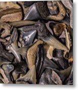 Sharks Teeth 8 Metal Print