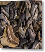 Sharks Teeth 9 Metal Print